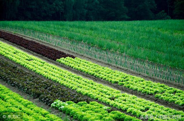什么是现代生态农业?