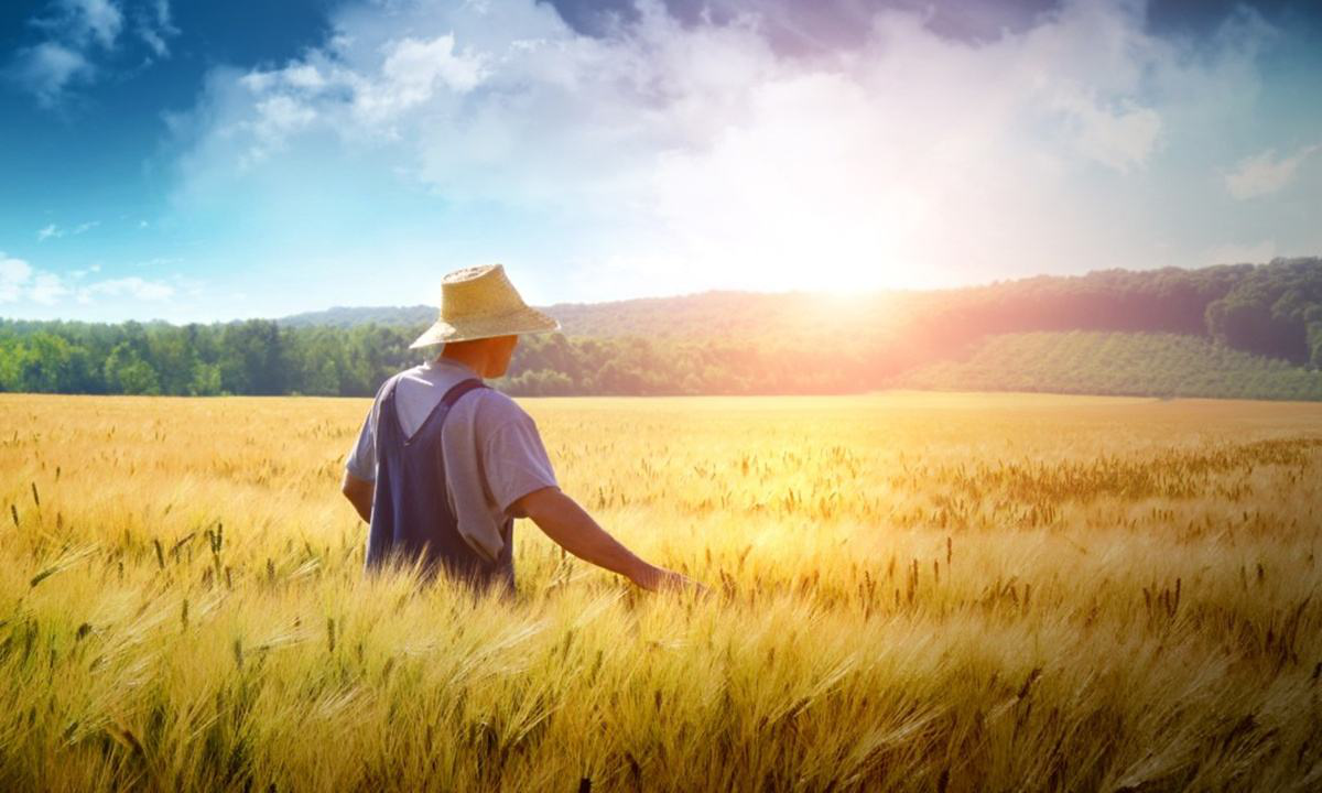 重磅|留德硕士做农业为何连续4年亏钱?