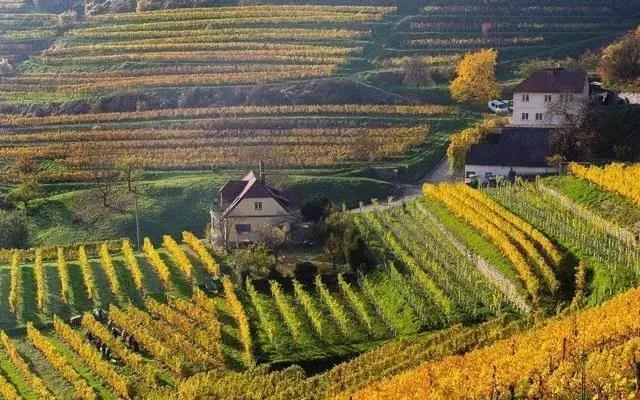 学习|中国有机农业如何破局?看看奥地利是怎么做的