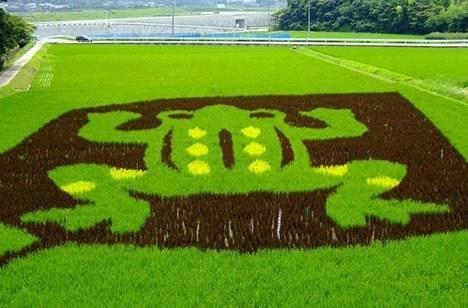 日本是如何打造环境友好型农业的?