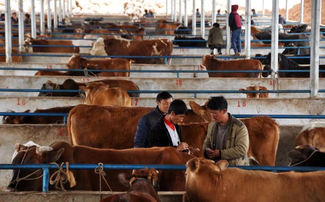 三农日报|国外研究:基因编辑食品安全;业内人士:农业的未来并非有机农业