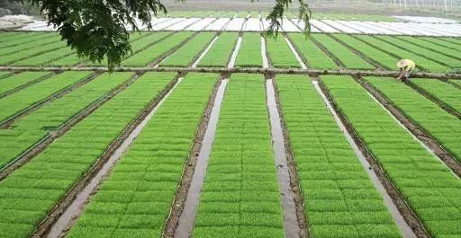 如何玩转农业全产业链?看这10个创新案例