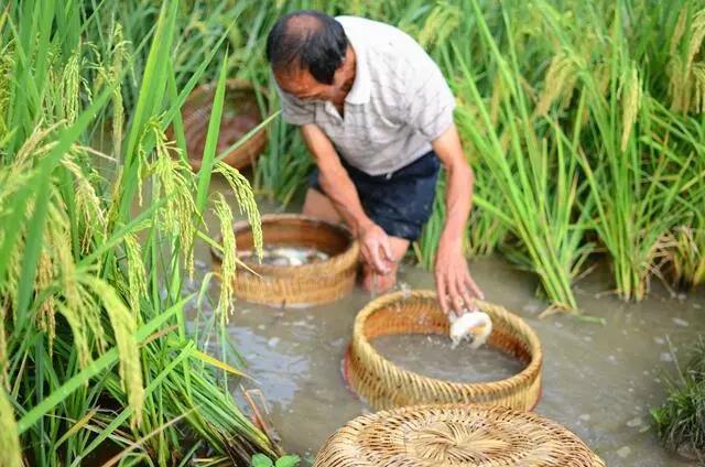 三农日报|2019年中央财政投入20亿元培育职业农民;阿里:要帮助普通人创业