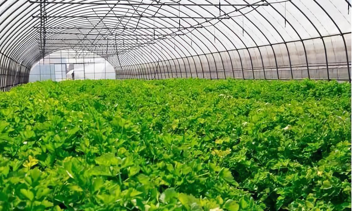 预测!有机农业:未来10年有巨大的发展潜力