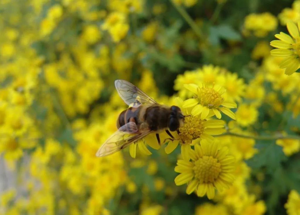 三农日报|日韩农业批发市场的特点;蜜蜂对有机农业具有系统重要性作用