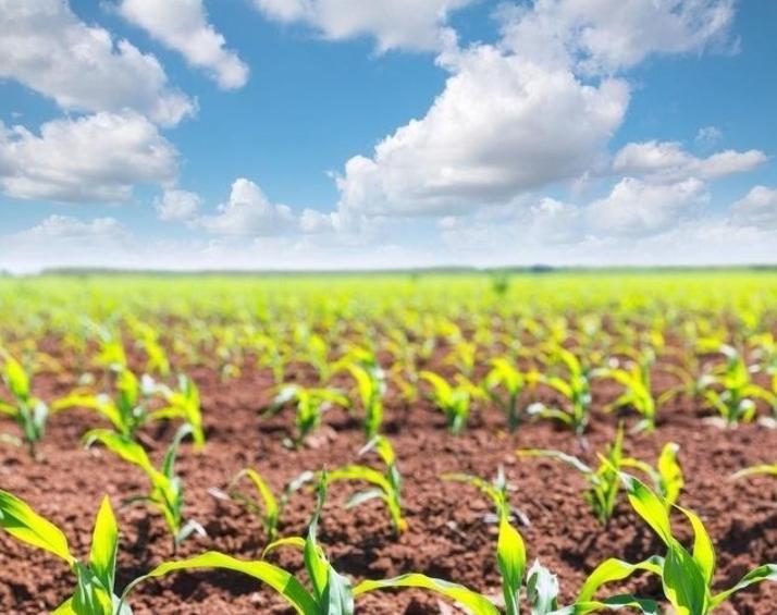 有机农业不赚钱?如何解决有机产品亏损,突破产业困境