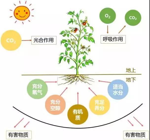 三农日报|临期食品市场规模值得期待;有机农业的第一目标:养土