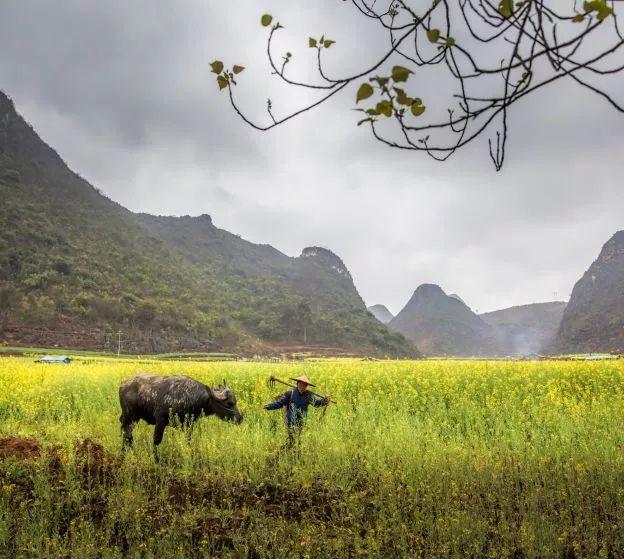 变革正在发生!中国有机农业将引领世界农业变革