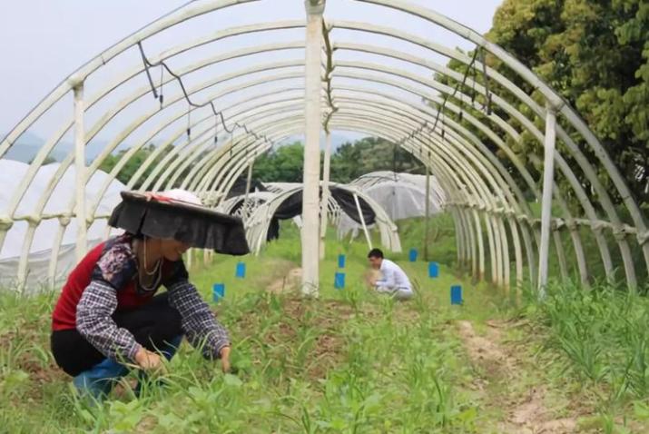 石化农业已死,有机农业将殇,未来农业的可持续之路在哪?