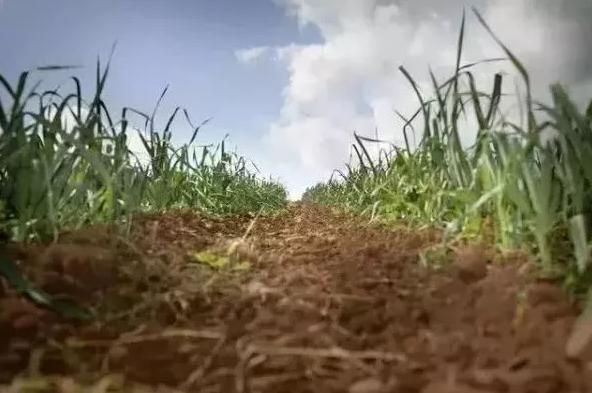 有机农业的真实现状:中国90%的有机农场都处于亏损状态