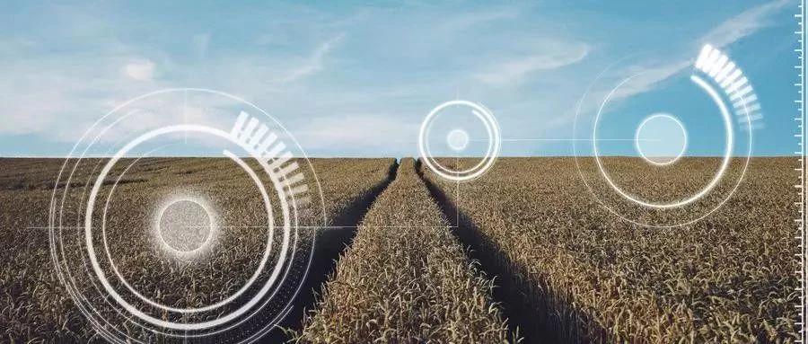 """农业+人工智能(AI),除了养猪,还能这样""""颠覆""""农业!"""