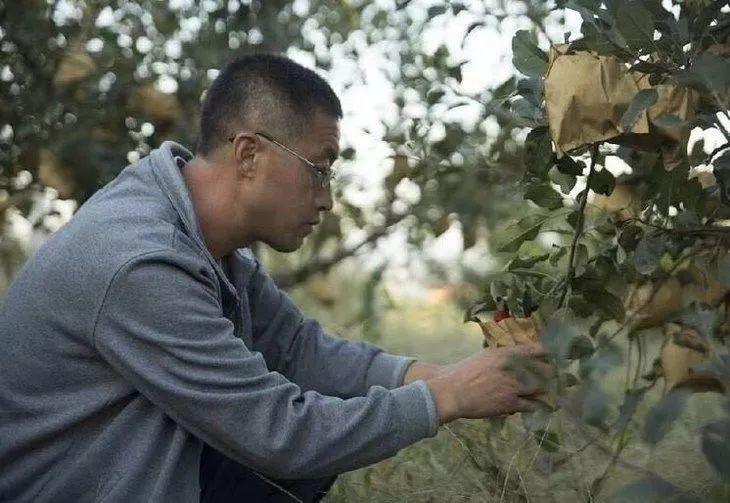 【行业知识】战疫:有机农业企业的7个影响+11个建议