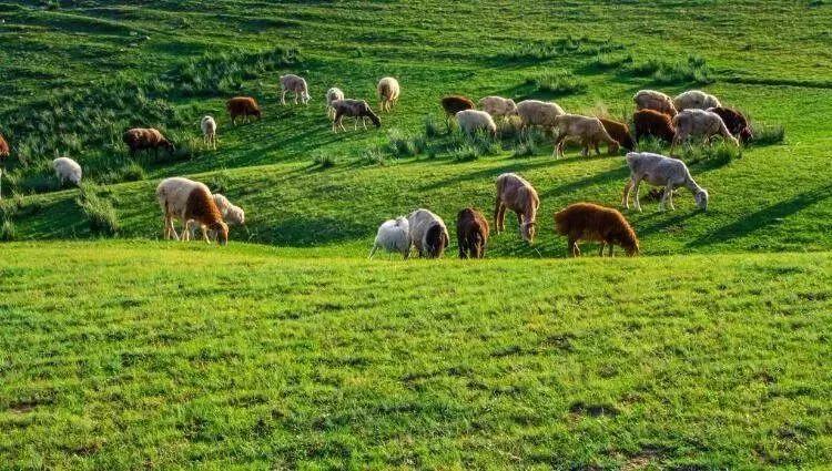 数据:2020年全球有机农业发展报告