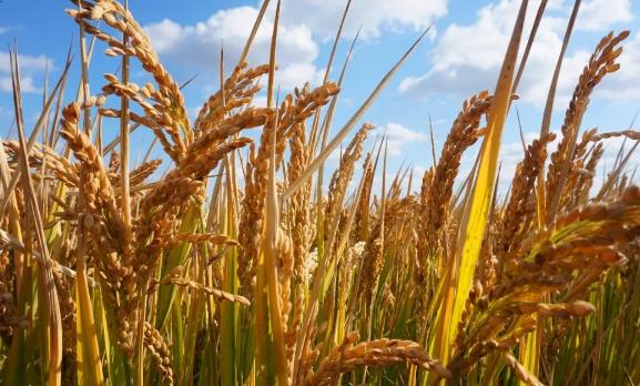 生态农业、绿色农业、有机农业有区别吗?