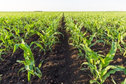 印媒:中国正成为有机农业的领导者