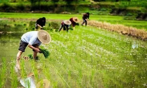 【趋势解读】2020年-2022年农业生产发展趋势有哪些?