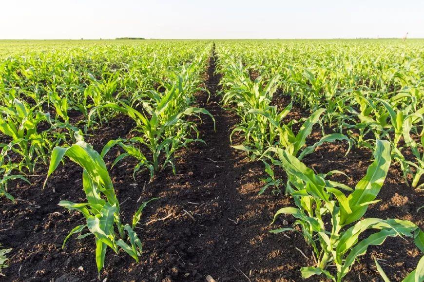 关注丨农业发展的理想方向——有机农业