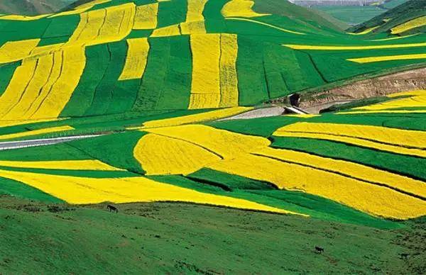 """农业绿色发展路径及其""""十四五""""取向"""