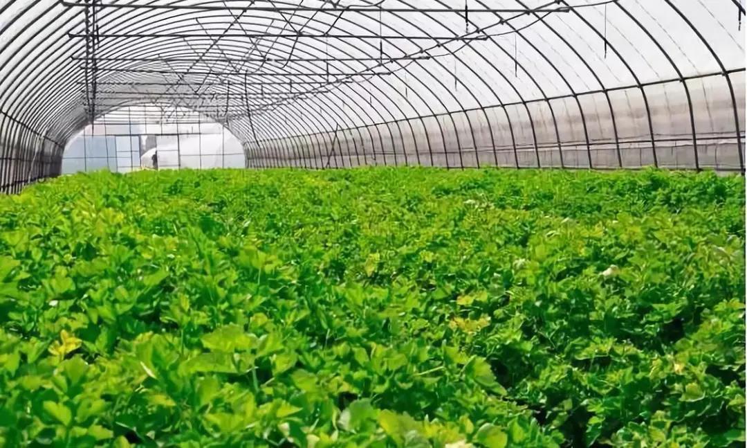 【预测】有机农业:未来10年有巨大的发展潜力