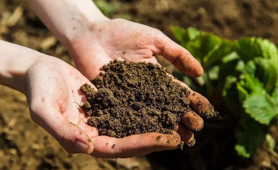 什么是有机农业?全面系统地回答你