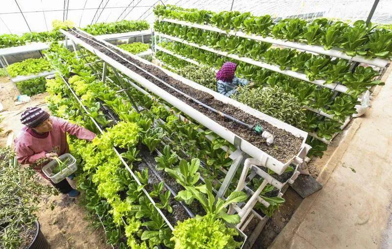 """【新知识】""""有机""""到底是什么?走出误区,正确认识有机肥与有机农业"""