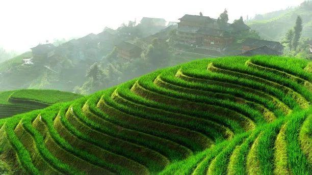 【深度剖析】绿色农业是什么?