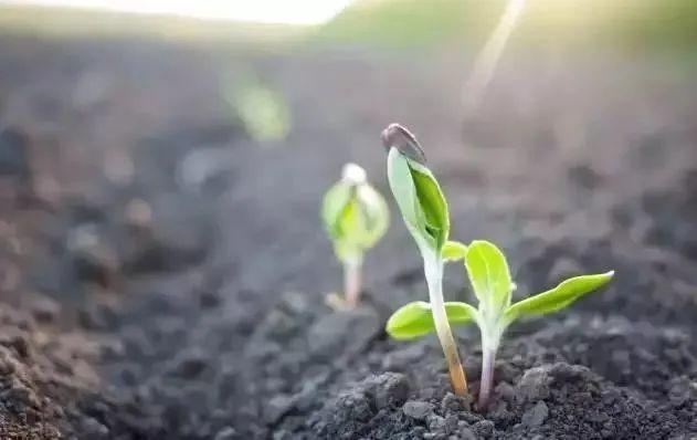 【行业趋势】未来10年,有机农业将领导中国农业