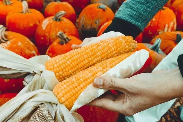 【产业趋势】未来10年将成有机农业的爆发之年,食品安全或将彻底解决!