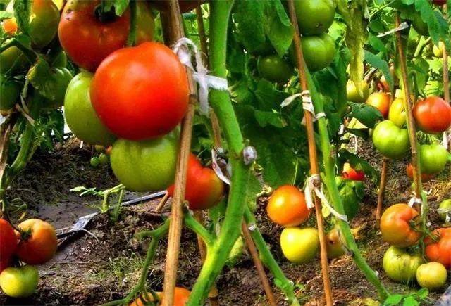 【深度剖析】对有机农业最大的误解:就是不用肥料、不打药