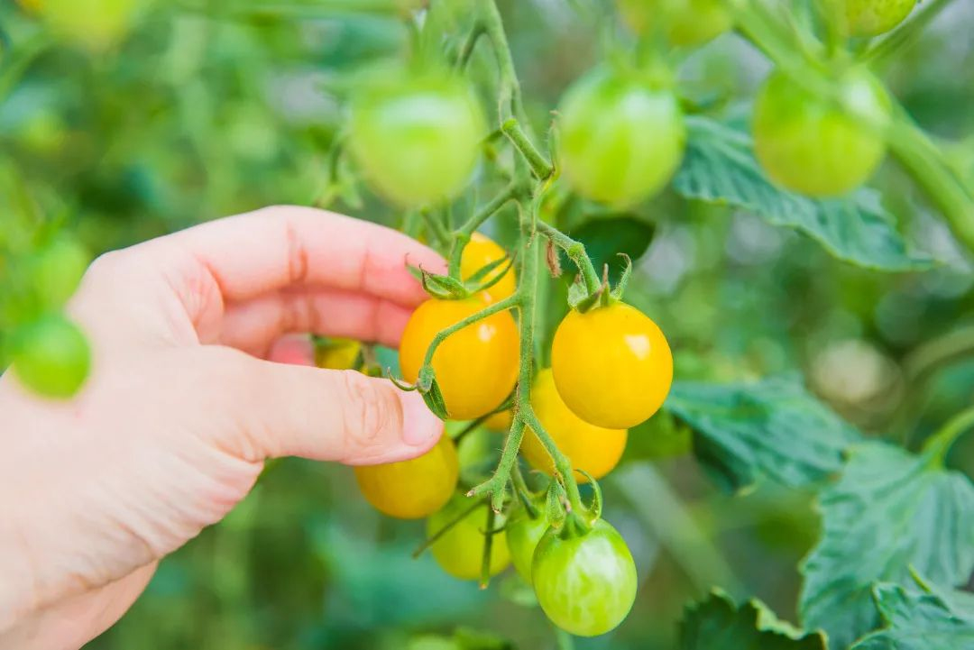 【有机农业】真正的有机农业,需要情怀,更需要实干!