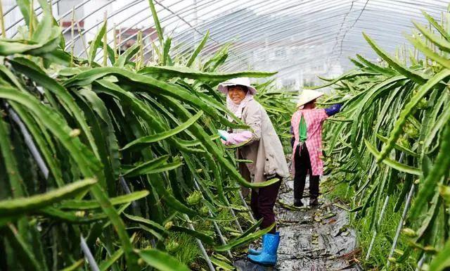 三农日报|有机肥是国家粮食安全的保证;有机农业是乡村振兴的可行路径