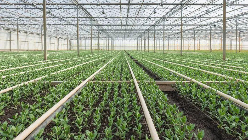 【有机农业】柯炳生:如何看待有机农业的发展?
