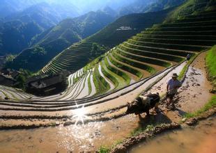 农业和旅游有机结合的8种方式,你晓得吗?