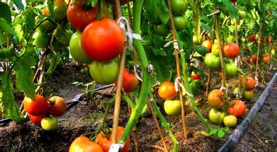 """有机农业与传统农业较量,到底怎样才能""""吃好""""?"""
