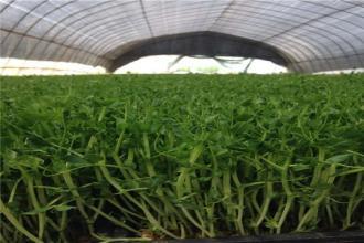 有机农业、生态农业、绿色农业的区别在哪里?