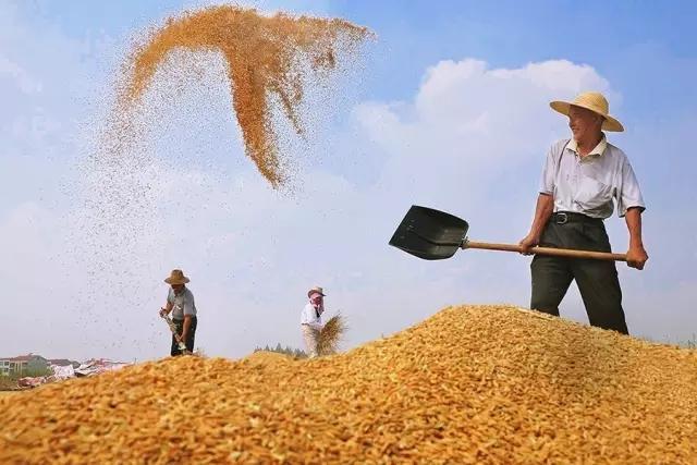 中国农业发展:鼓励竞争 慎重补贴