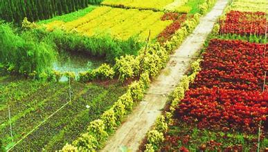 有机农业、生态农业、绿色农业三者的区别