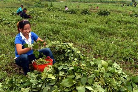 既然做有机农业越来越穷,你为什么不放弃呢?
