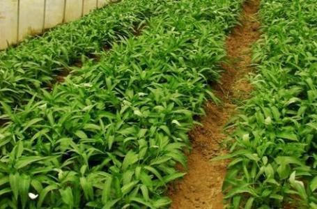 盘活土壤,有机农业靠什么肥料?