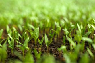 有机农业 它能拯救全世界吗?