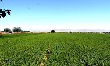 深度解析:有机农业、生态农业、绿色农业有何区别