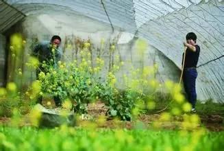 有机农业,抓商机还是玩投机?