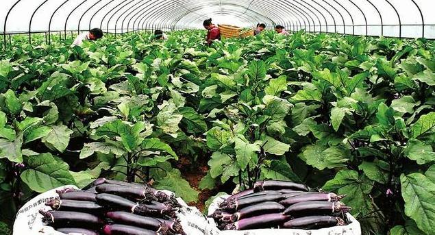 """江西:未来4年""""搞大""""绿色有机农业产业"""