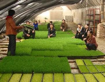我国有机农业的发展前景