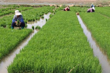 2017年发展有机农业需要转变思维 如何发展好生态农业