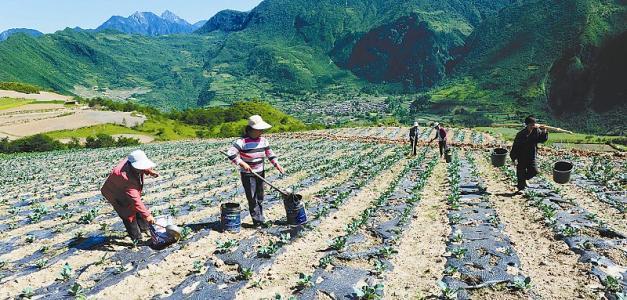 """中央一号文件5次提""""有机"""",有机农业发展将迎来这些利好!"""