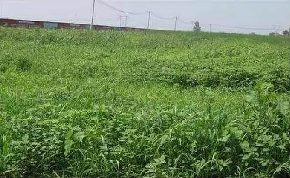 租地1500亩10年不种的日企,最终还是黯然退出中国,循环农业在中国真得不行吗?