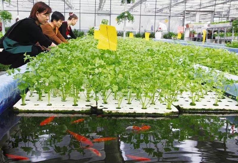 """【创业小黑板】特色农业:致富的""""金钥匙"""""""