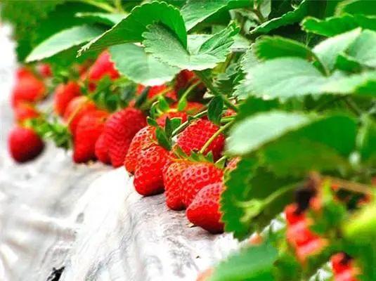 """【农业创业】46个""""不靠谱""""的农业项目,农业人都得看看"""