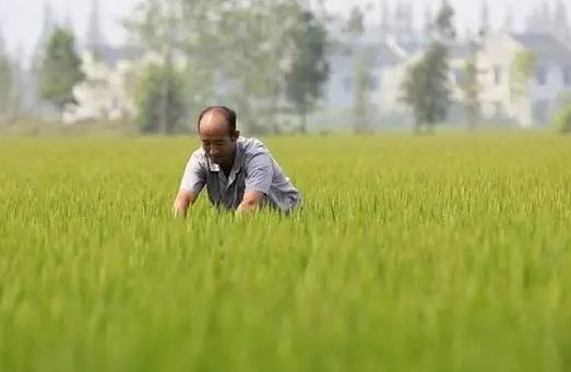 分享|流转了1200亩土地,2年时间赔了300多万!这位农民兄弟的忠告不得不看!